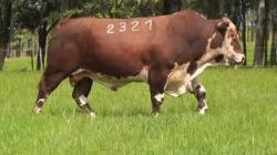 57B - tat 2321