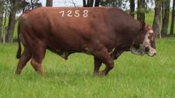 58A - tat 1258
