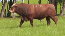 63A - tat 3310