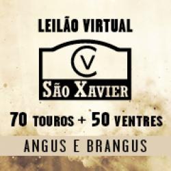 Leilão São Xavier 2021 - Virtual