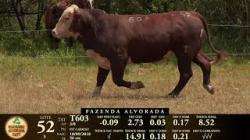 Lote 52 - 1 macho - Tat T603 - 2018