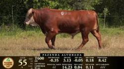 Lote 55 - 1 macho - Tat T600 - 2018