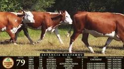 Lote 79 - 5 femeas - 2013-14