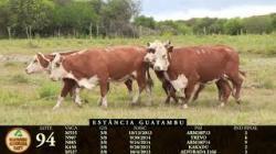 Lote 94 - 5 femeas - 2011-13-14